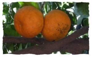 Redim-oranges