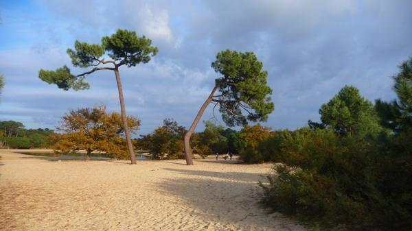 arbre P1410029