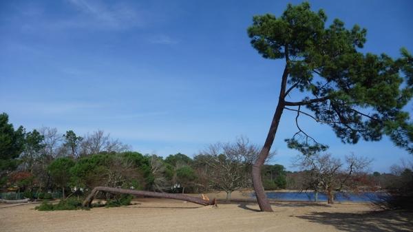 arbre P1420431