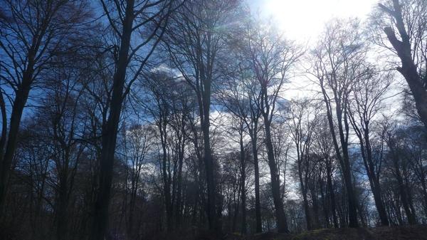 forêt P1430969