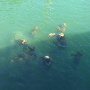 sous l'eau P1430770
