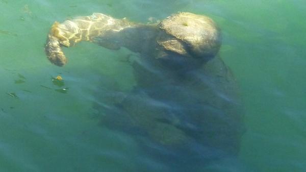 sous l'eau P1430771