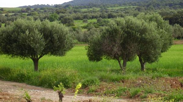 avril 2006 Grèce P4180191