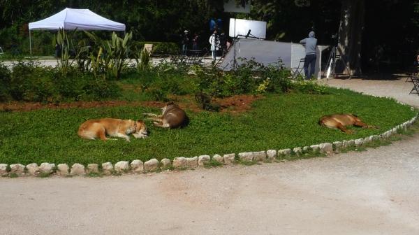 grèce Grèce - Athènes (Jardin National).JPG