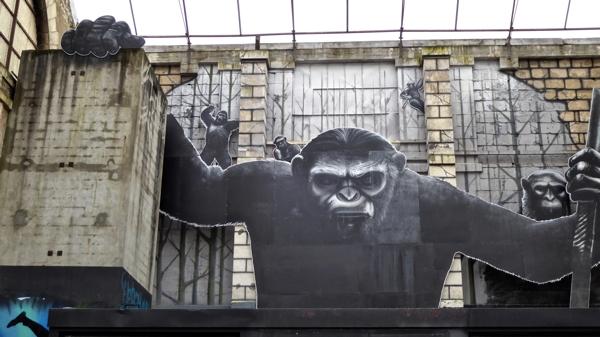gorille P1000133.jpg