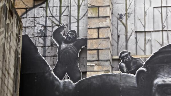 gorille P1000134.jpg