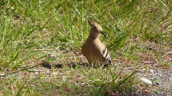 oiseauP1020805.jpg