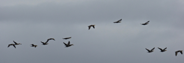 certes-cormoran-jpg