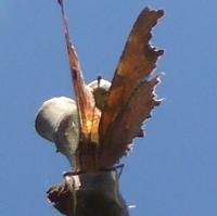 papillonP1100262.JPG