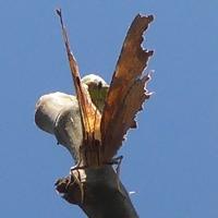 papillonP1100263.JPG