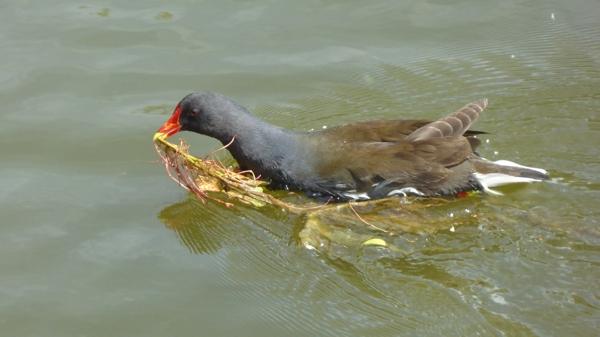 oiseaux-P1110511.JPG