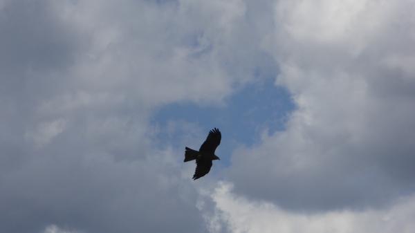 oiseaux-P1110563.JPG