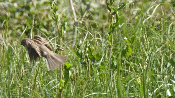 oiseaux-P1110616.jpg