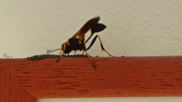 insecte-P1130485.jpg