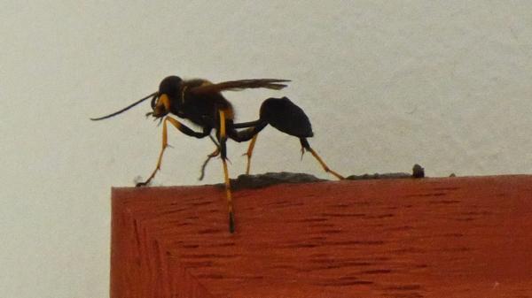 insecte-P1130486.jpg
