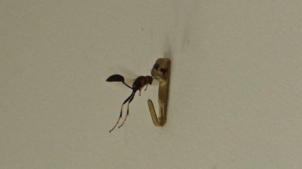 insecte-P1130491.jpg