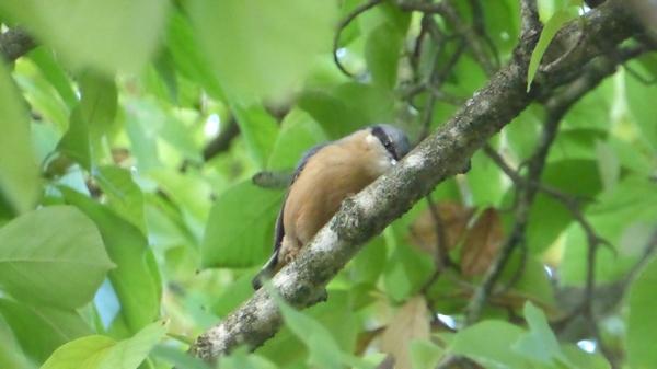 oiseau-P1160270.JPG