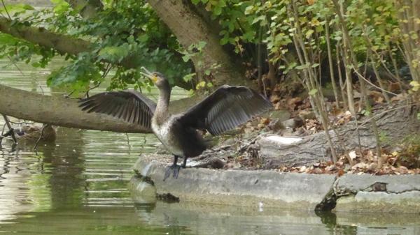 oiseau-P1160371.jpg