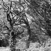 arbres-P1190476.jpg