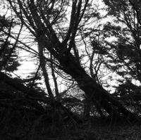 arbres-P1190478.jpg