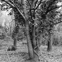 arbres-P1190480.jpg