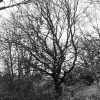 arbres-P1190481.jpg