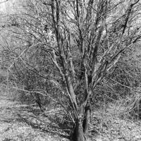 arbres-P1190482.jpg