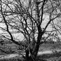 arbres-P1190484.jpg