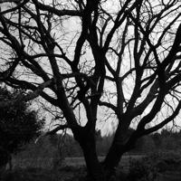arbres-P1190485.jpg