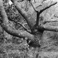 arbres-P1190486.jpg