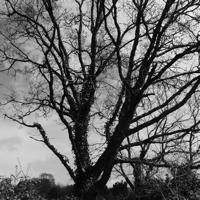 arbres-P1190487.jpg