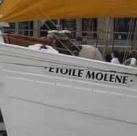 Etoile Molène-P1200773.jpg