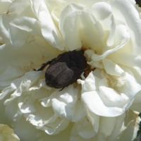 insecte-P1200489.jpg