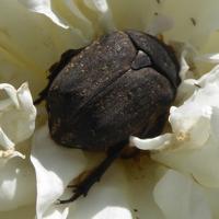 insecte-P1200490.jpg