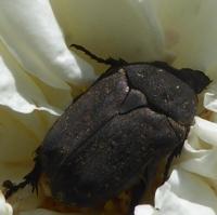 insecte-P1200491.jpg
