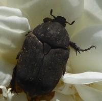 insecte-P1200492.jpg