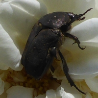 insecte-P1200493.jpg
