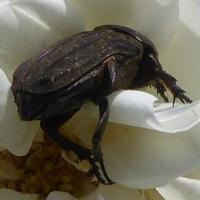 insecte-P1200494.jpg