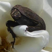 insecte-P1200495.jpg