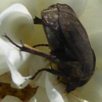 insecte-P1200497.jpg