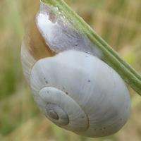 escargots-P1210089.jpg