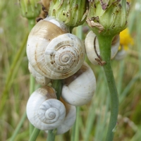 escargots-P1210093.jpg