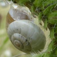 escargots-P1210096.jpg