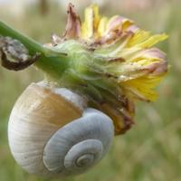 escargots-P1210097.jpg