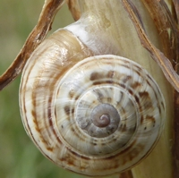 escargots-P1210099.jpg