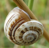 escargots-P1210101.jpg