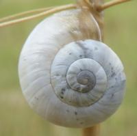 escargots-P1210104.jpg