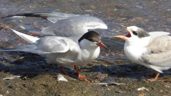 oiseaux-P1210450.jpg