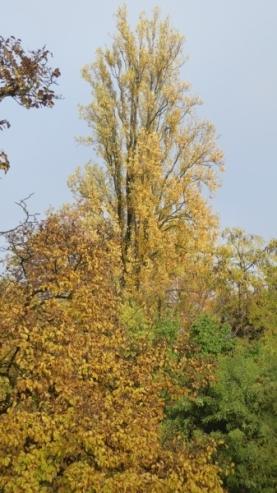 automne-P1230221.jpg