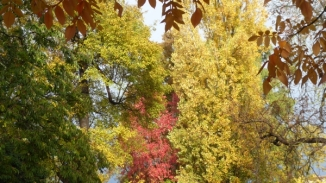 automne-P1230222.jpg